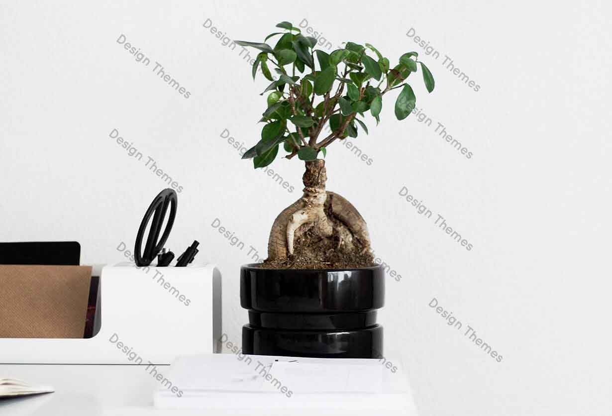 Effect of Bonsai tree in living room